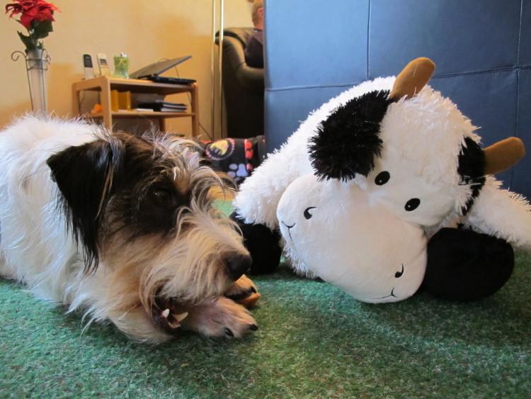 Und meine Freundin Kuh Elsa - die teilt alles mit mir ;-)