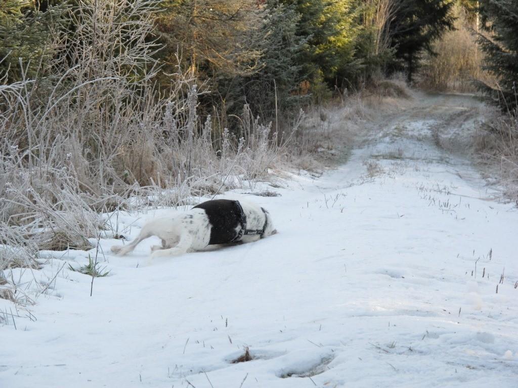 Hurra ein Schneefeld :-)