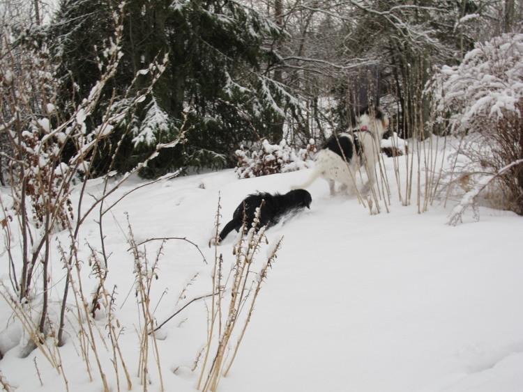 Juhu und sooo viel Schnee :-)