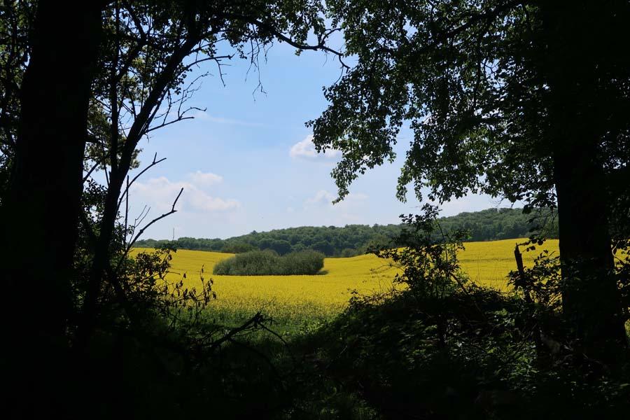 Erst schön durch den Wald und dann raus auf die Felder...