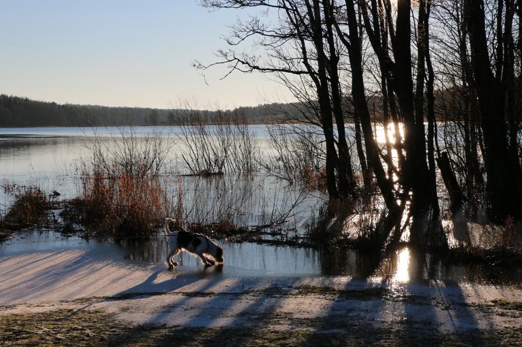 Jipiehh mein See ist schon gefroren