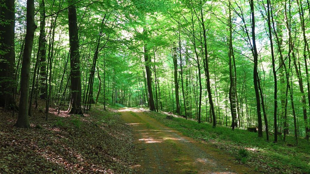 So schöne Wälder vor der Haustür