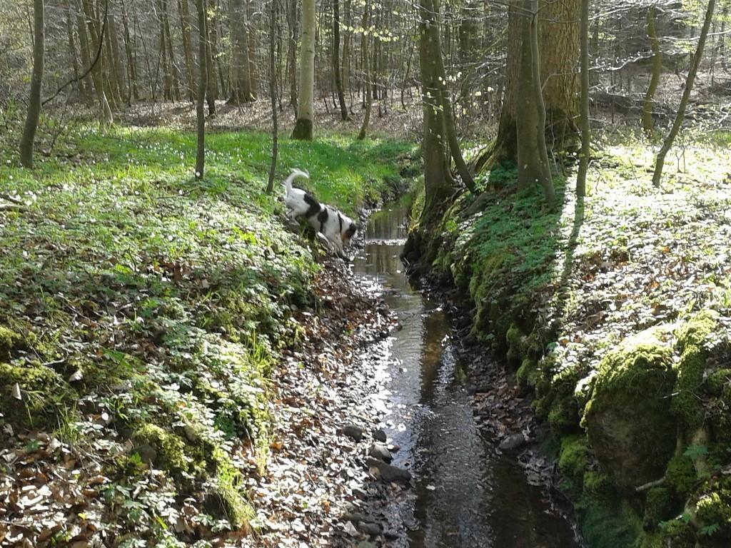 Und Wald - juchee!