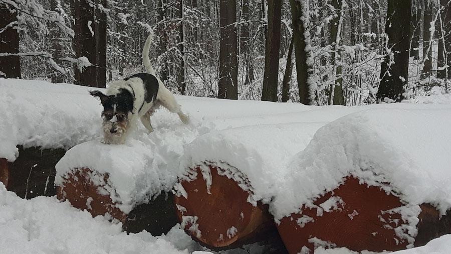 Unser Schneetiger