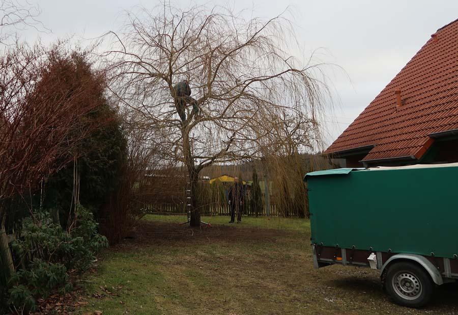 Und jetzt geht es den Bäumen an den Kragen...