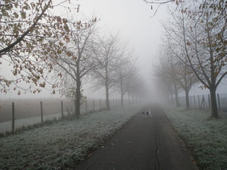 Dann endlich mal ein Tag mit Nebel...