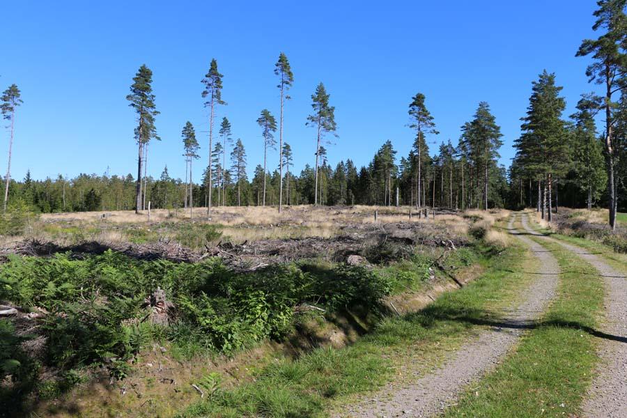Uii hier wurde aber viel abgeholzt
