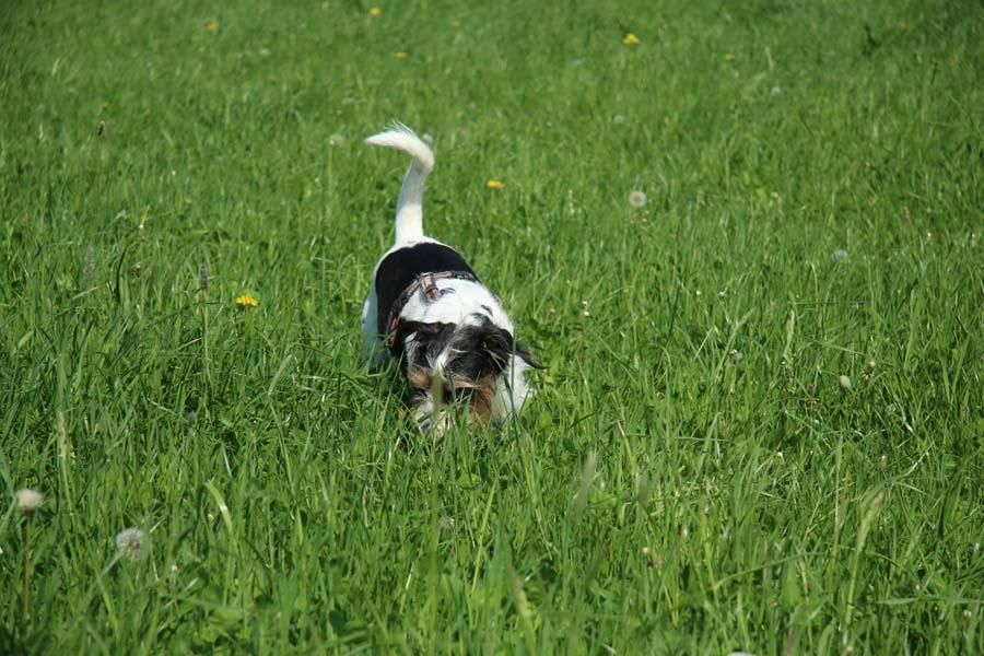 Zum abkühlen durchs Gras