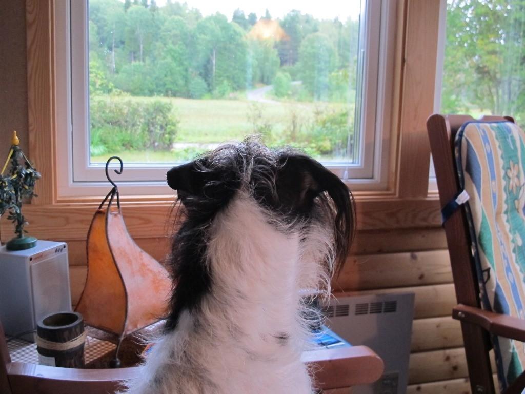 Immer alles im Blick - oder warten auf den nächsten Elch?