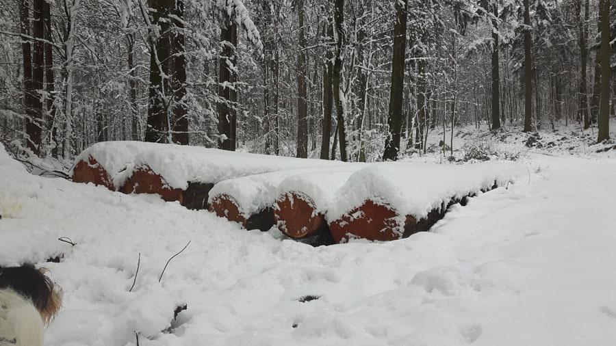 viel Schnee auch im Wald