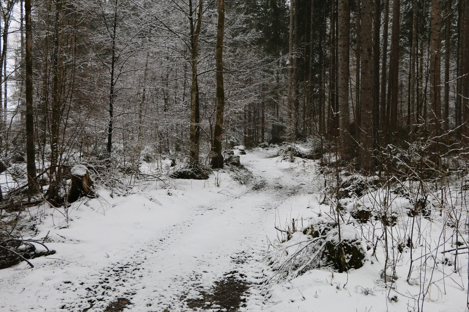 ...in den Zauberwald...