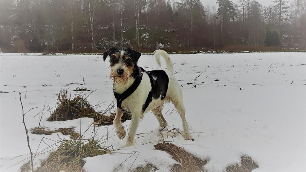Liebt ihr den Schnee eigentlich auch so wie ich?