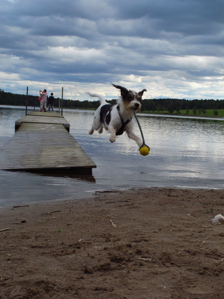 Flying Bjarne