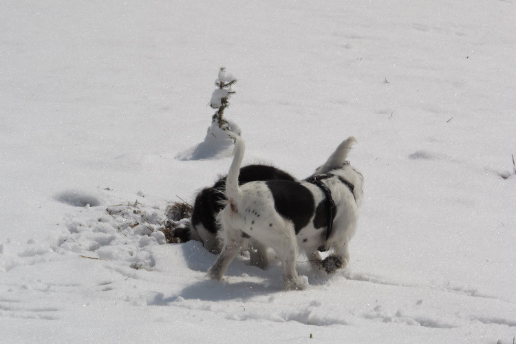 ...während andere durch den Schnee tollen....