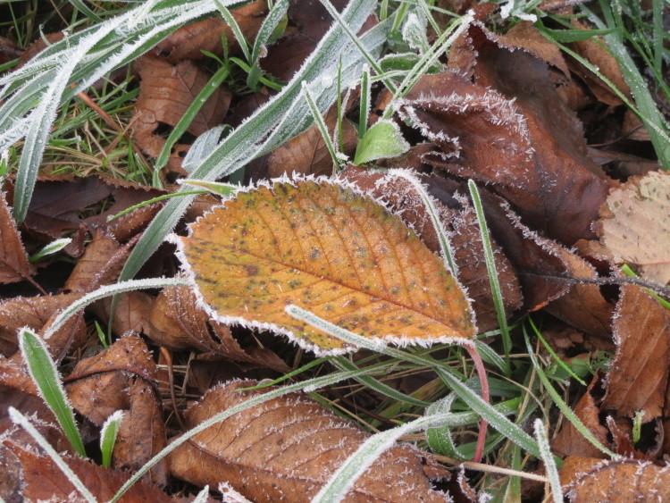 ...die Herbstimpressionen...