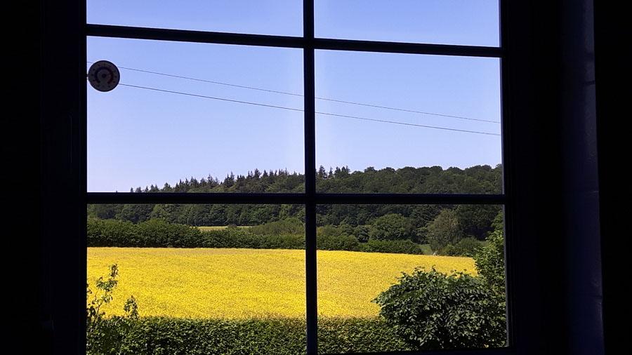 Ein Blick aus unserem Fenster, die Rapsblüte direkt vor der Haustür...