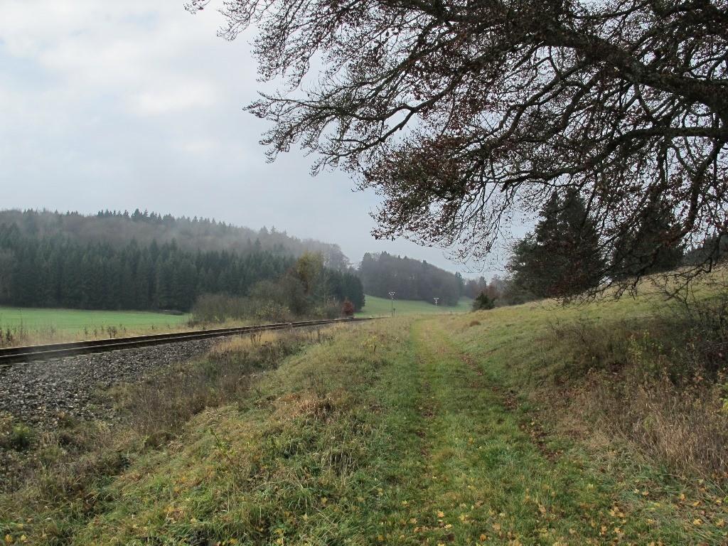 ...und dann nur noch durch Wald und Wiesen...