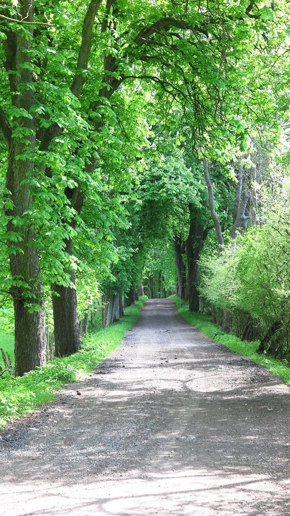 ...entlang schöner Alleen...