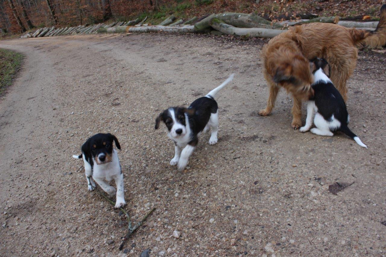 Krümel und Kuddel, Nuria und Kalle
