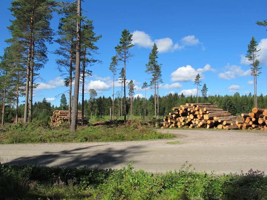 Hier wurde ordentlich abgeholzt...