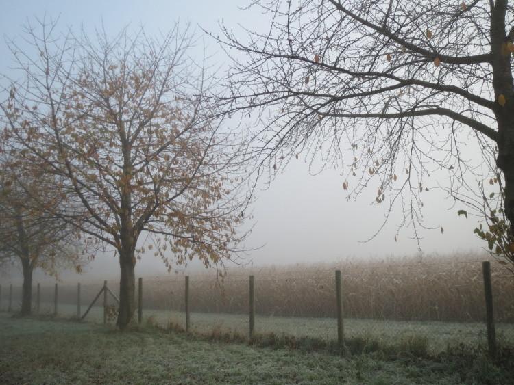 ...und Bodenfrost