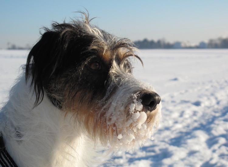 Bjarne und sein Schnee