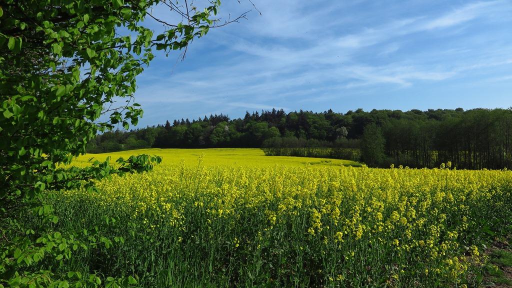 Schönste Felder um die Ecke