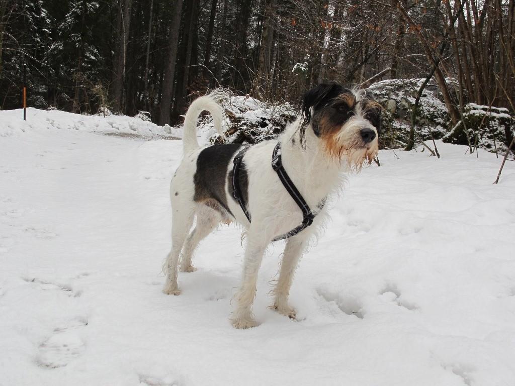 Und Schnee...