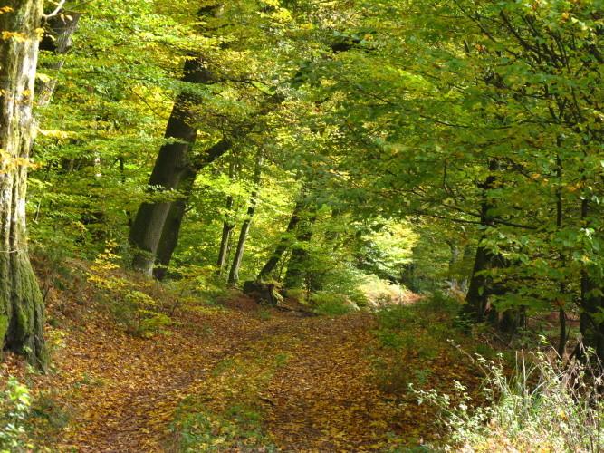 Auf geht es in den schönen Pfälzer Wald...