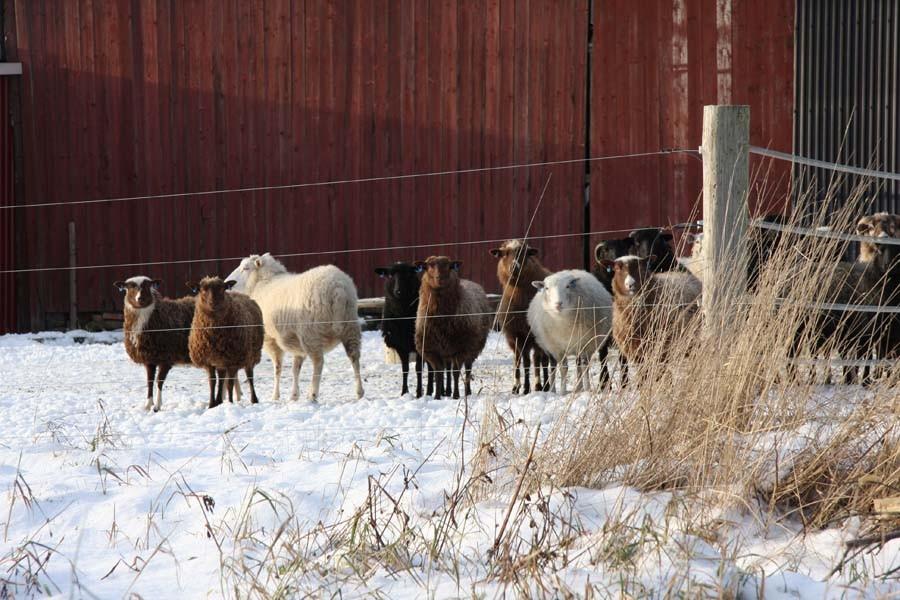 Die spielen wohl nicht so gerne im Schnee ;-)
