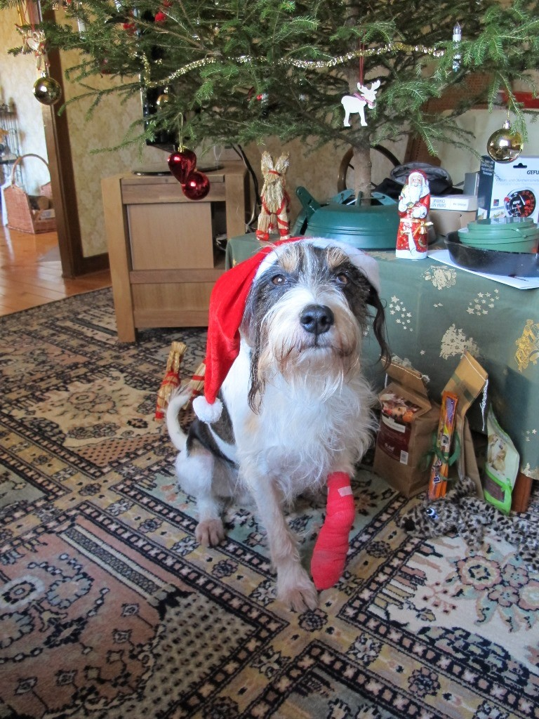 Na klasse unterm Weihnachtsbaum mit Verband