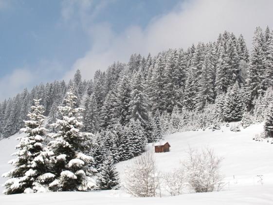 Dicke, dicke neuer Schnee und wieder blauer Himmel :-)