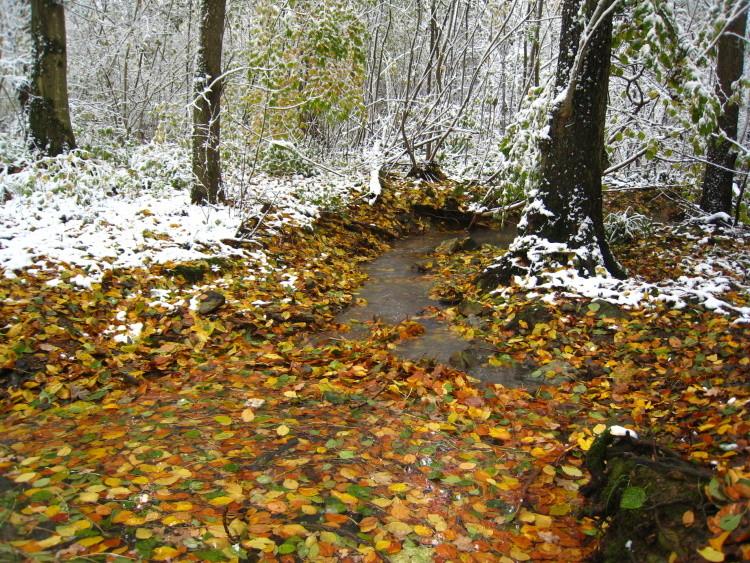 ...den Herbst-/Winterwald mit seinen Farben