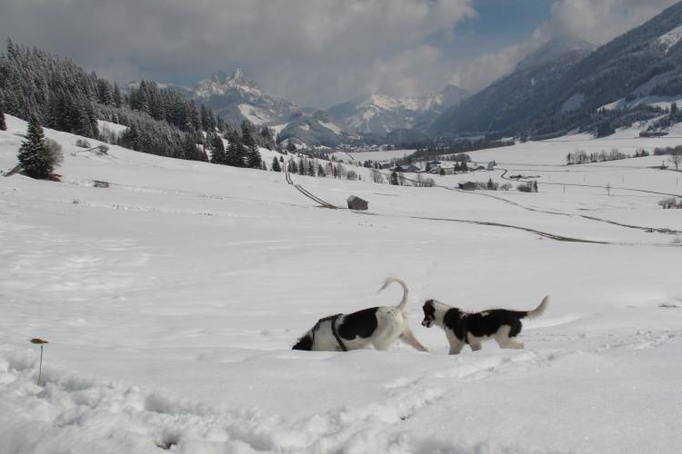 ....auch unterm Schnee....