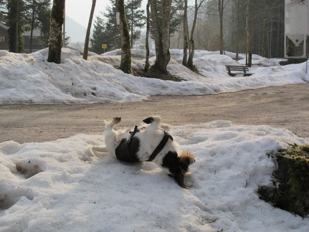 Aus dem Auto, rein in den Schnee