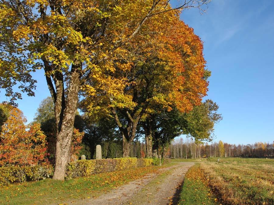 Herbstimpressionen aus Schweden...