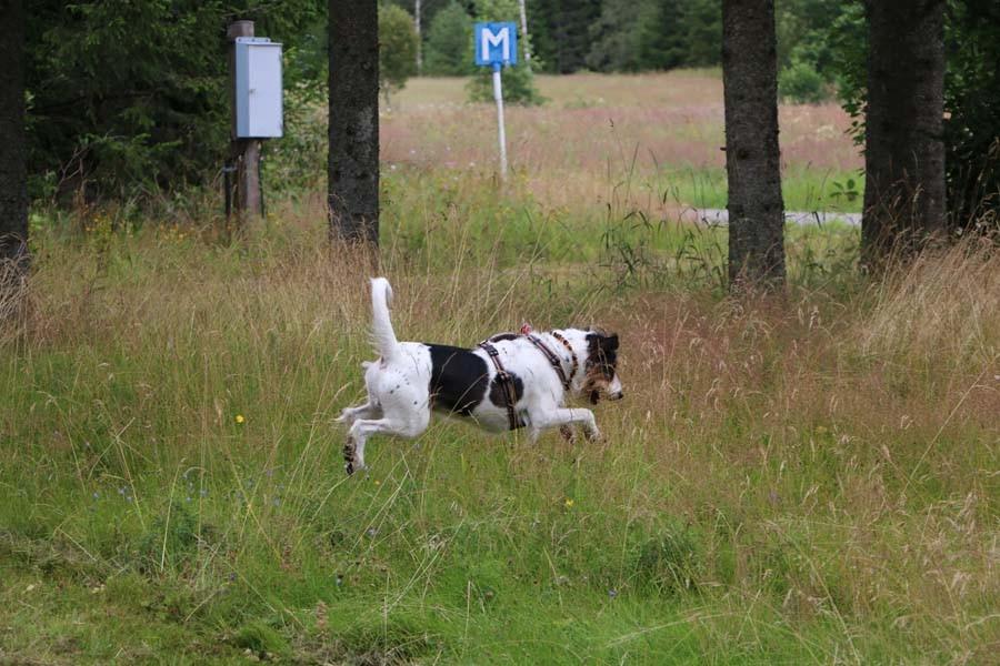 Hurra und ab ins hohe Gras