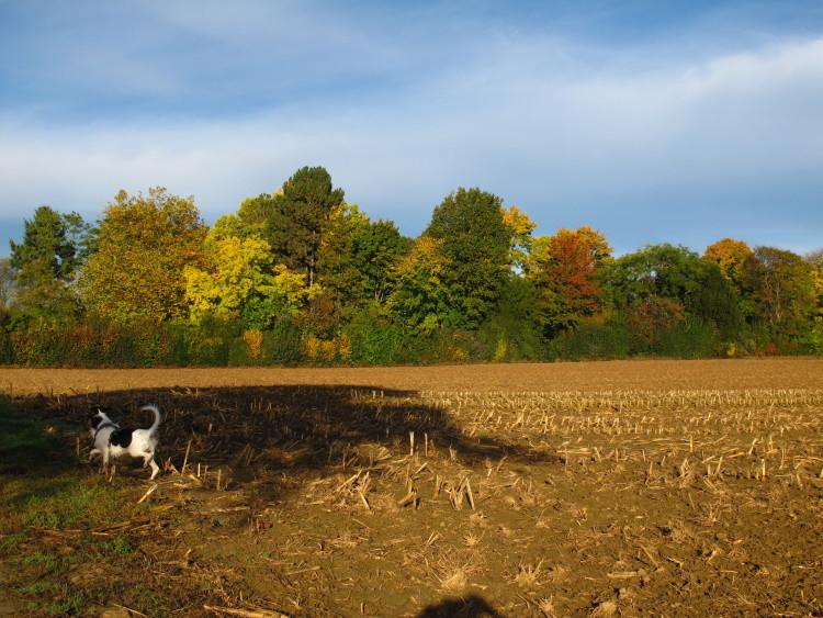 Meinen Feldern...