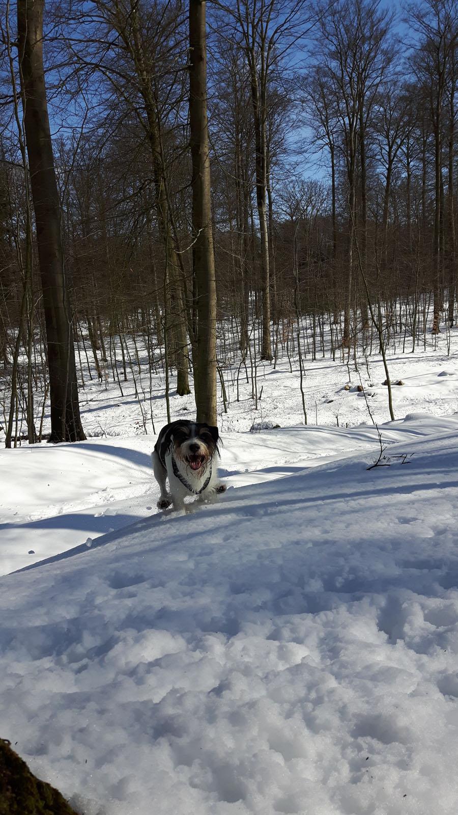 Hauptsache ich kann rennen, am liebsten im Schnee