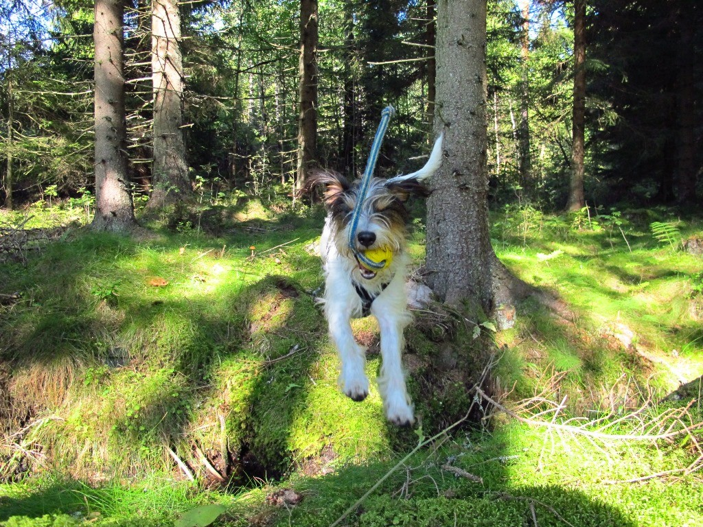 ...und gesprungen. Welch ein Spaß - ich liebe Wald
