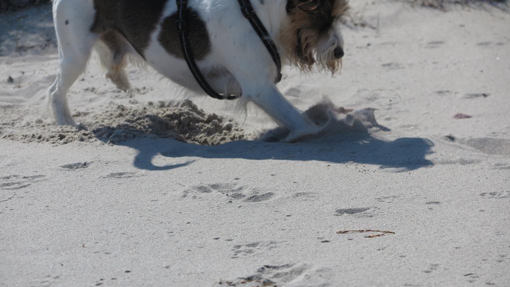 Der Sand ist mir doch lieber