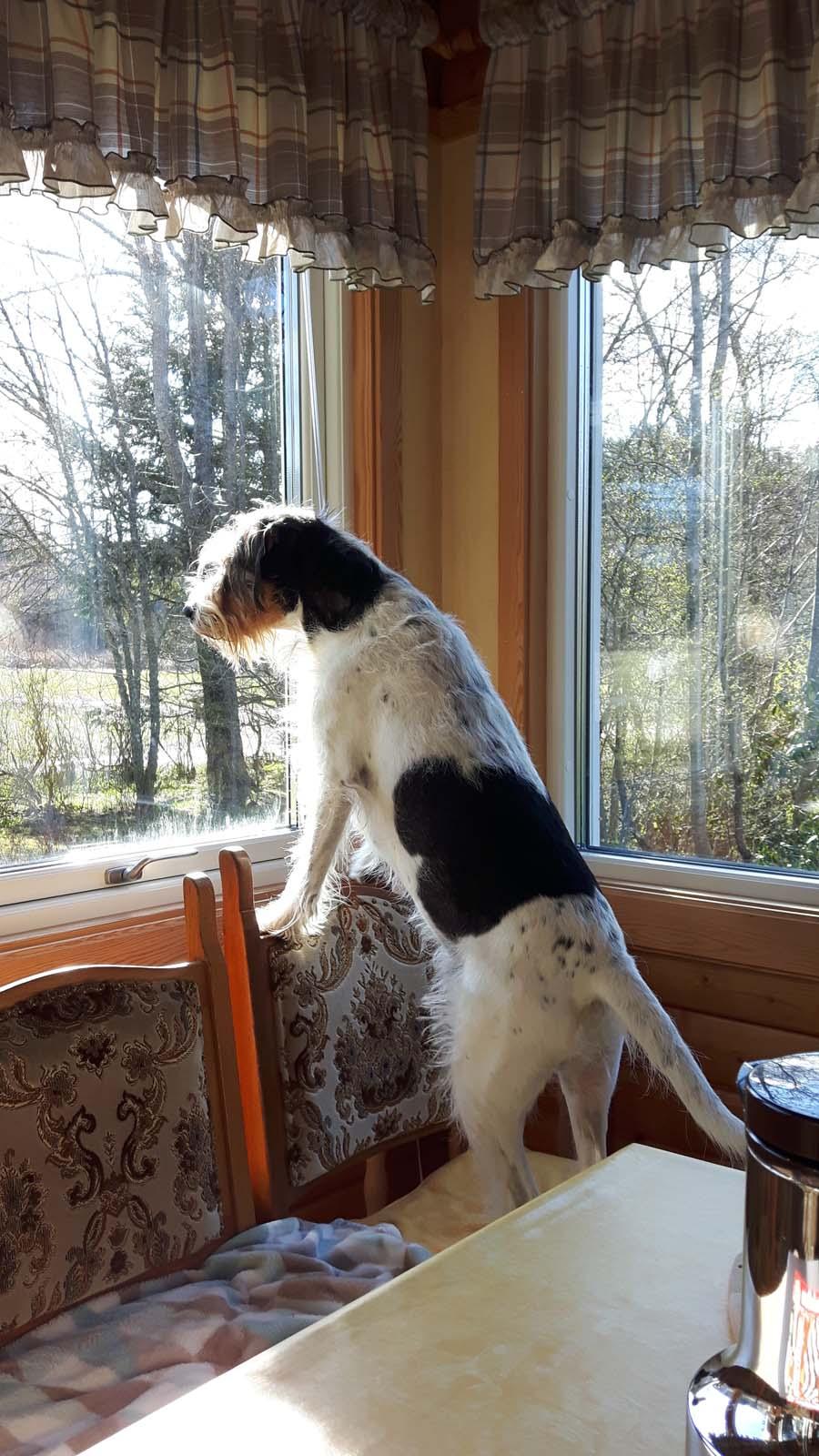 Und ich darf nicht raus? Weil Bella läufig ist?