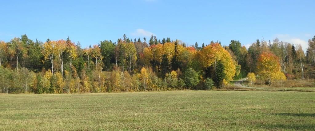 Der Herbstwald vor der tür