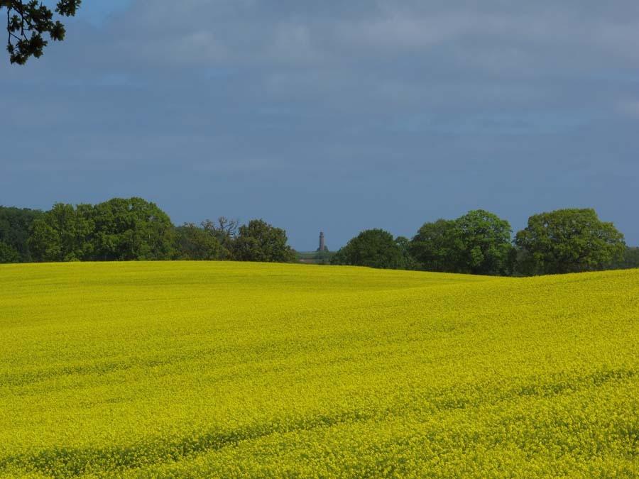 ...durch die leuchtend, gelbe Natur...