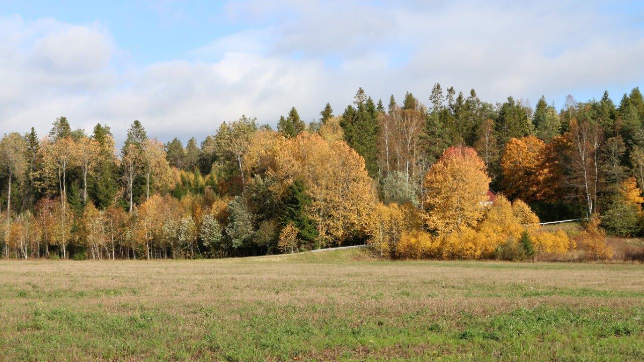 Auch goldener Oktober...