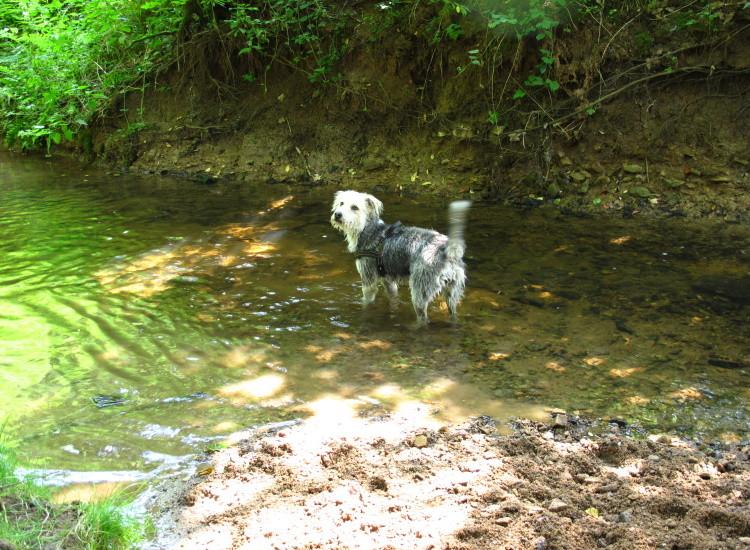 Shila ist die absoulte Wassermaus