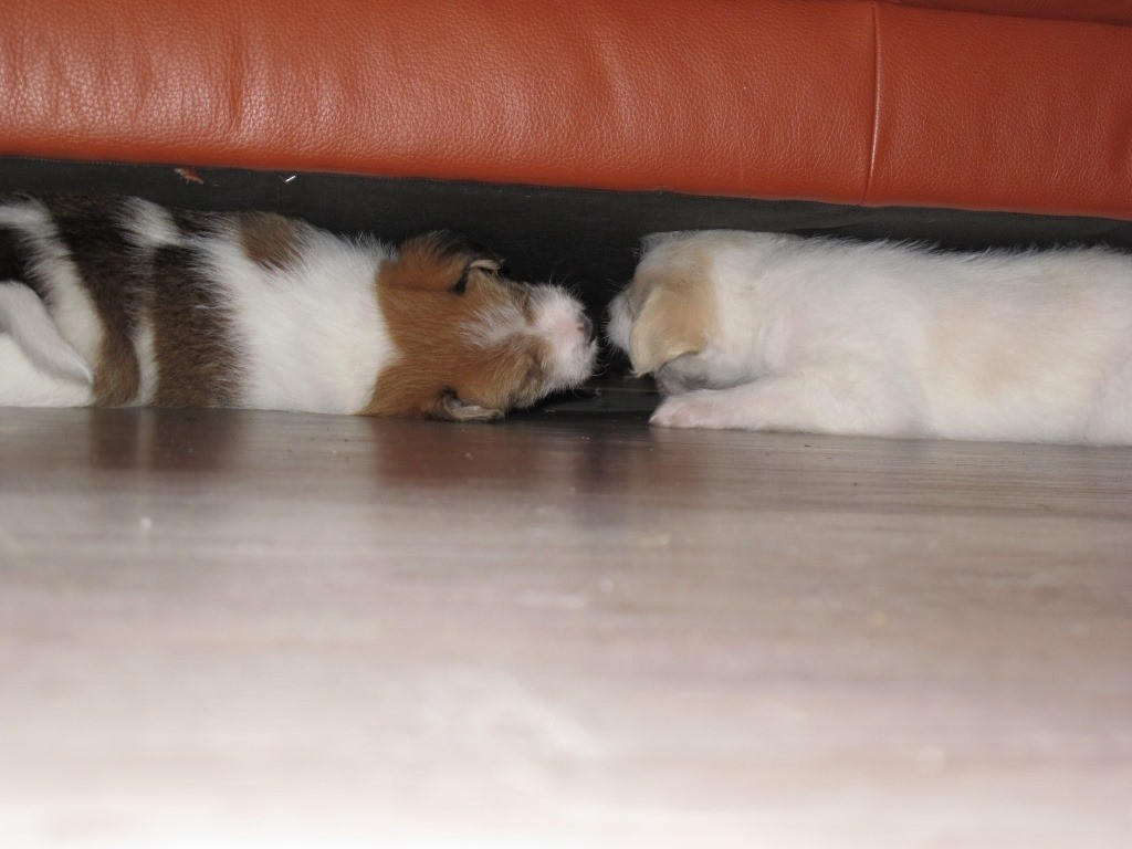 Und unters Sofa passen wir auch noch