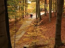 Parco Burcina