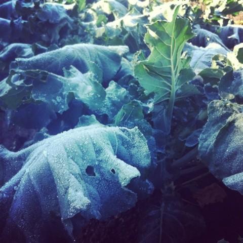 霜がおり白銀に染まる朝