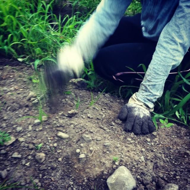 土と向き合い野菜を想ふ